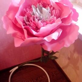 Пион. Цветок-гигант