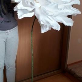 Ростовые цветы.